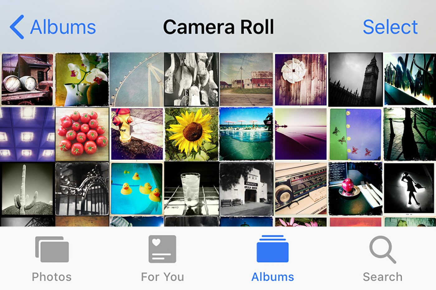 Screen shot of camera roll on smart phone
